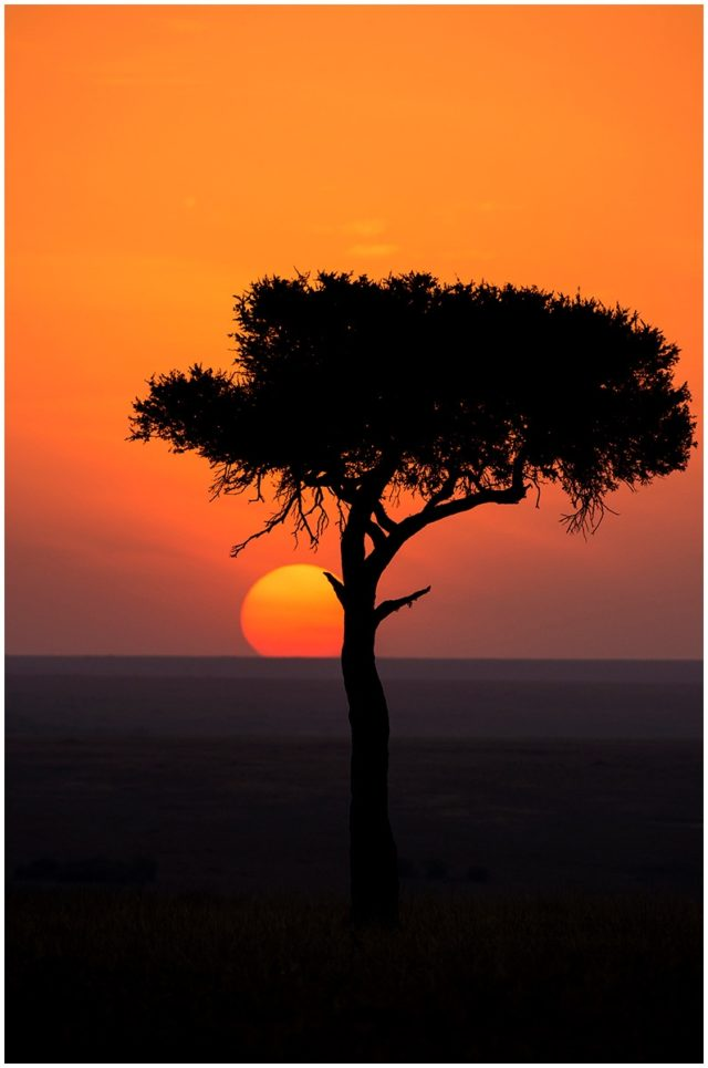 African Sunset signed limited edition framed print by Paul Haddon