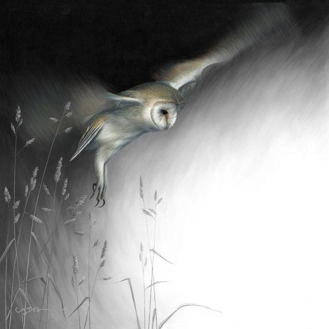 Barn Owl (In Flight Series)