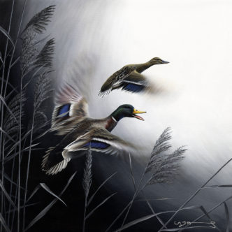 Mallard Ducks (In Flight Series)