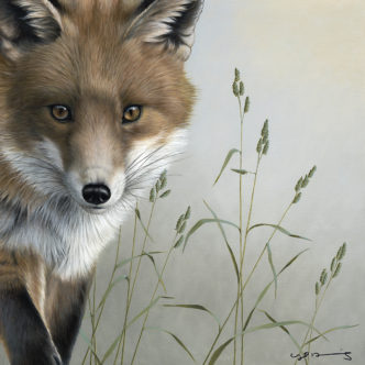 Fox Original Painting