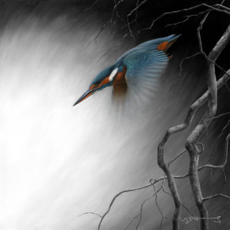 Kingfisher (In Flight Series)