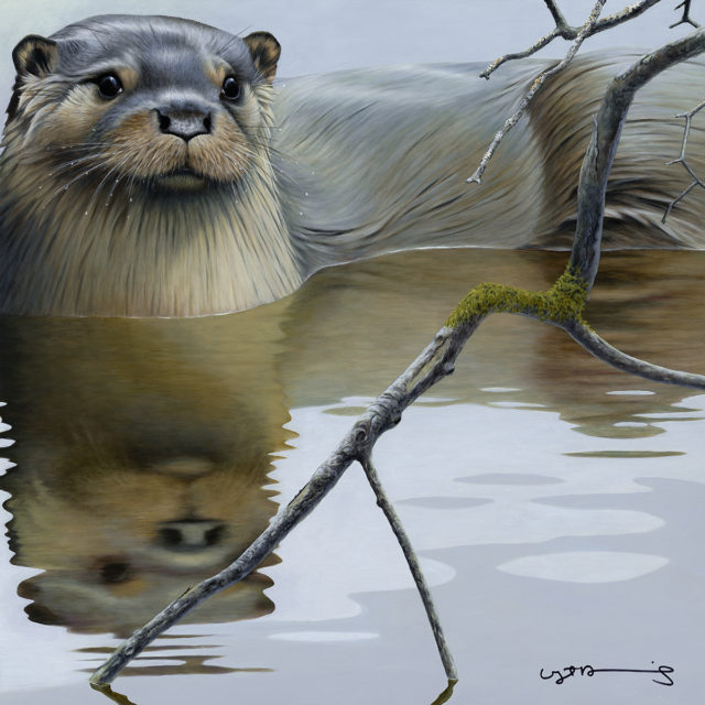 Otter (British Wildlife Series)