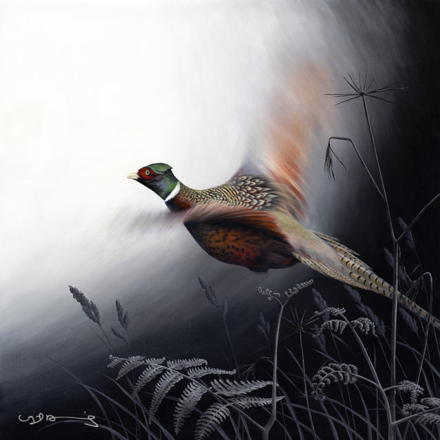 Pheasant (In Flight Series)