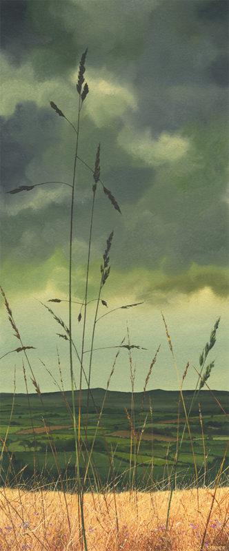 Stormy Meadows