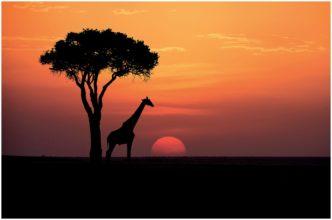 Paul Haddon Sundowner in the Maasai Mara