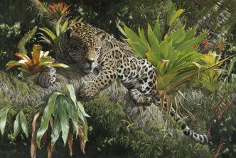 Amazonian Prince by Steve Burgess