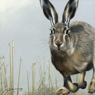 Hare (British Wildlife Series)