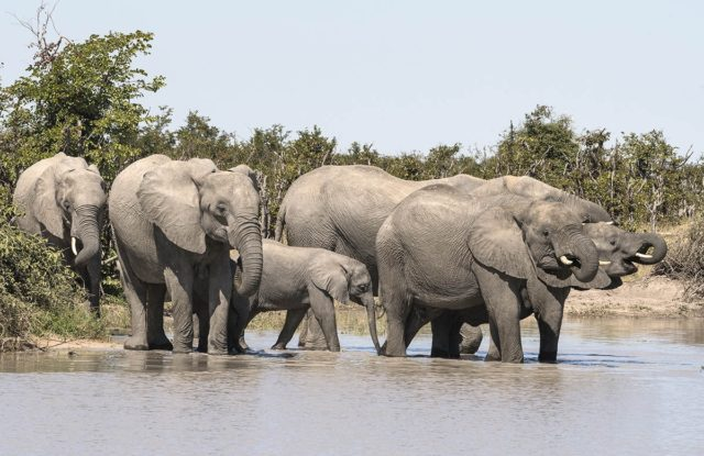 A Welcome Drink by Fiona Haddon Elephant Photography