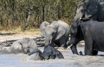 Babies Bath Time by Fiona Haddon Elephant Photography