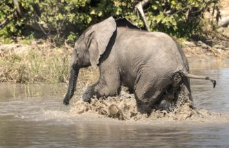 Splashing In The Cool Waters by Fiona Haddon Photography Elephant