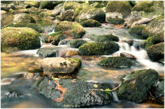 Paul Haddon Photography Mossy Rocks Shaugh Bridge Dartmoor Plymouth