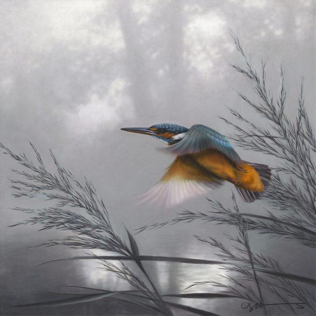 Kingfisher Taking Flight by Nigel Hemming