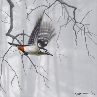 Woodpecker Taking Flight by Nigel Hemming