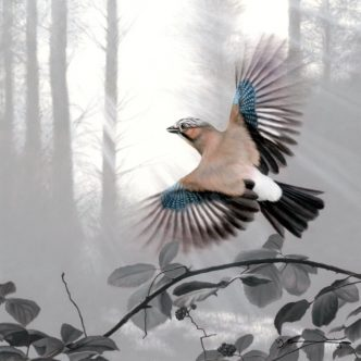 Jay - Taking Flight by Nigel Hemming