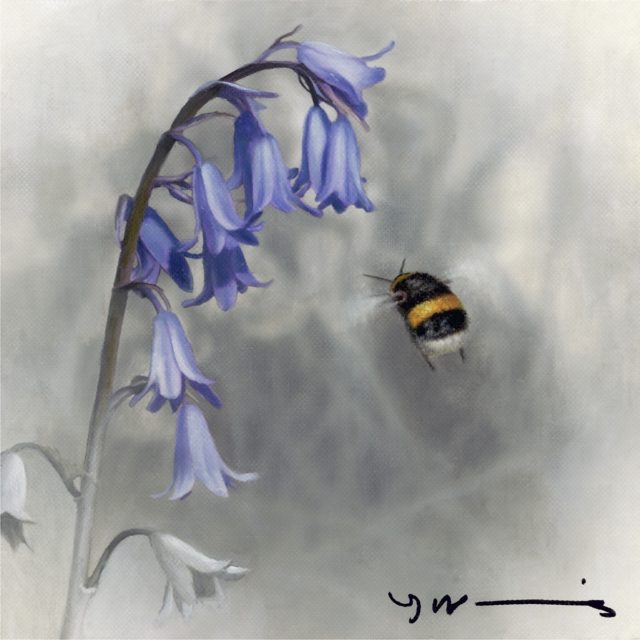 Bluebell - Buff Tail Bee by Nigel Hemming