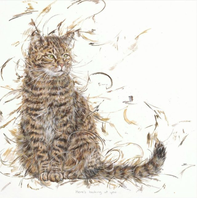 Has Anyone Seen Eggbert? by Aaminah Snowdon cat art tabby