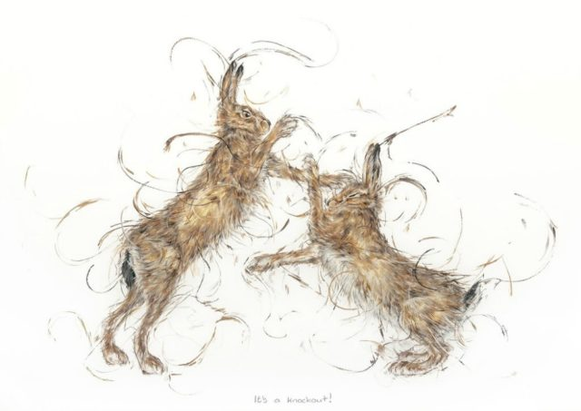 it's A Knockout by Aaminah Snowdon hares, fighting hare art