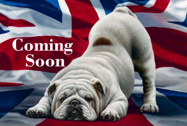 Jack English Bulldog