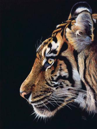 Sue Payton Asia Tiger
