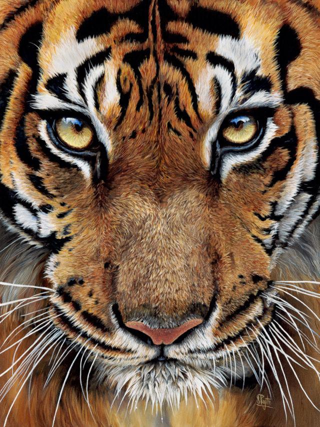 Sue Payton Indira-Tiger