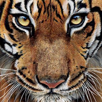 Sue Payton Wildlife art