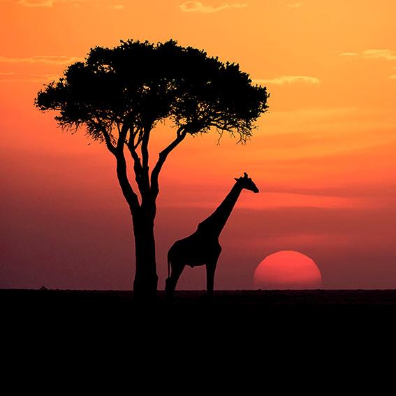 Paul Haddon Wildlife Photography